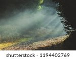 mysterious foggy forest... | Shutterstock . vector #1194402769