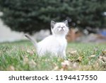 kitten cat cute | Shutterstock . vector #1194417550