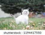 kitten cat cute | Shutterstock . vector #1194417550