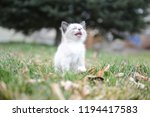 kitten cat cute | Shutterstock . vector #1194417583