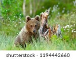 babe brown animal in nature... | Shutterstock . vector #1194442660