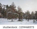 landscape in the winter forest  ... | Shutterstock . vector #1194468373