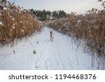 winter landscape. the dog runs... | Shutterstock . vector #1194468376