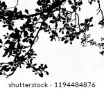 Branches Of Plum Tree With...