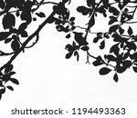 branches of plum tree with... | Shutterstock . vector #1194493363
