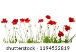 red poppies isolated on white | Shutterstock . vector #1194532819
