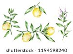 watercolor illustration. the... | Shutterstock . vector #1194598240