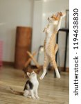 Stock photo kitten leaps in the air cat jumping and playing at home love cats and humans relationship lovely 1194638830