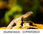 lizard light bath | Shutterstock . vector #1194652813