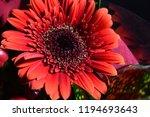 red flowers bouquet | Shutterstock . vector #1194693643