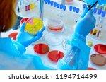 petri dish. microbiological... | Shutterstock . vector #1194714499