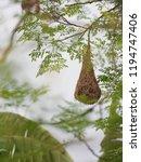 bird nest on the tree | Shutterstock . vector #1194747406