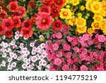 different color flowers as very ... | Shutterstock . vector #1194775219