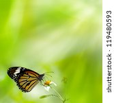 Brilliant Swallowtail Butterfly ...