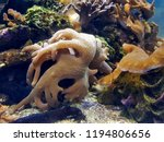 the yellow finger leather coral ... | Shutterstock . vector #1194806656
