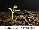 seedling growth | Shutterstock . vector #119485060
