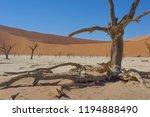 deadvlei in the namib naukluft... | Shutterstock . vector #1194888490
