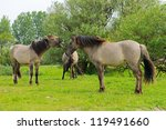 wild horses in beautiful landscape - stock photo