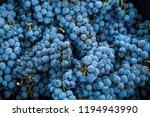 harvest of merlot in tuscany | Shutterstock . vector #1194943990