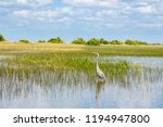 florida wetland  airboat ride...   Shutterstock . vector #1194947800