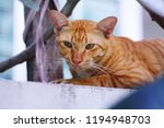 cat on the wall   Shutterstock . vector #1194948703