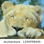 white lion is a rare color... | Shutterstock . vector #1194998440