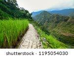 a path through the rice... | Shutterstock . vector #1195054030