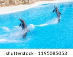 some dolphins are jumping... | Shutterstock . vector #1195085053