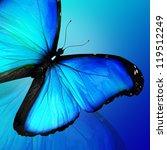 Blue Butterfly On Blue...