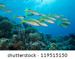 goat fish swim in beautiful... | Shutterstock . vector #119515150