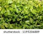 green parsley closeup | Shutterstock . vector #1195206889