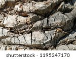 palm tree bark seen from close... | Shutterstock . vector #1195247170