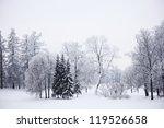 Winter Trees On Snow White...
