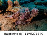 scorpion fish on the seabed  in ... | Shutterstock . vector #1195279840