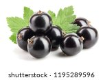 black currant with leaf... | Shutterstock . vector #1195289596