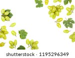 green grapes isolated on the... | Shutterstock . vector #1195296349