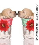 Puppy Love  Sleeping Puppies I...