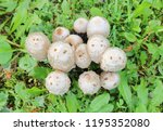 overhead view of a cluster of... | Shutterstock . vector #1195352080