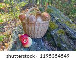 mushrooms in the basket and... | Shutterstock . vector #1195354549