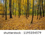 fallen golden leaves in the...   Shutterstock . vector #1195354579