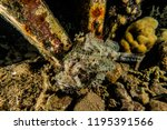 scorpion fish on the seabed  in ... | Shutterstock . vector #1195391566