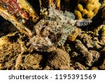 scorpion fish on the seabed  in ... | Shutterstock . vector #1195391569
