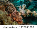 scorpion fish on the seabed  in ... | Shutterstock . vector #1195391620