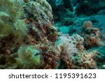 scorpion fish on the seabed  in ... | Shutterstock . vector #1195391623