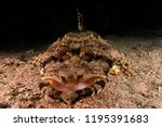 scorpion fish on the seabed  in ... | Shutterstock . vector #1195391683