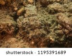 scorpion fish on the seabed  in ... | Shutterstock . vector #1195391689