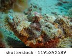 scorpion fish on the seabed  in ... | Shutterstock . vector #1195392589