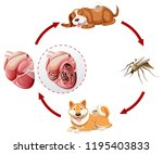 heartworm life cycle chart... | Shutterstock .eps vector #1195403833