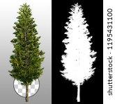 Pine Isolated With A...