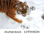 portrait tiger in the forest in ... | Shutterstock . vector #119544034